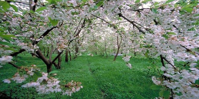 پاکسازی بدن در فصل بهار