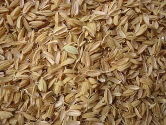 شلتوک برنج