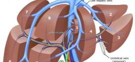 کبد پیچیده ترین عضو بدن
