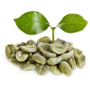 خواص و مضرات قهوه سبز