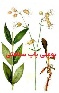 بهمن سفید