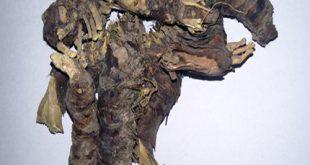 ریشه ایرسا